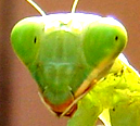 Bugmanbugclubsmall